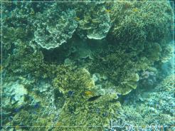 Pescador Island-4