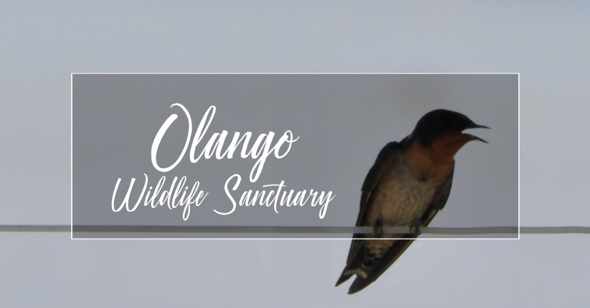 Bird Watching at Olango Wildlife Sanctuary